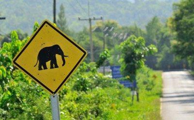 Cartello Stradale Attenzione agli Elefanti